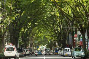 区民とともに創りあげた杉並区基本構想案を評価 ―「みどり豊かな住まいのみやこ」―
